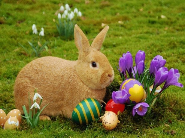 easter-bunny-1024x768